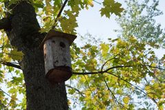 Oiseau de Chambre d'automne - unique durées image stock