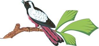 Oiseau de chant Photographie stock