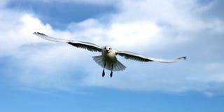 Oiseau de ciel dans le ciel Photos libres de droits