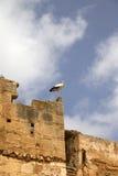 Oiseau de cigogne Photo libre de droits