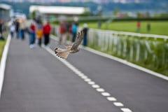 Oiseau de crécerelle Photo stock