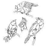 Oiseau de croquis Photographie stock libre de droits