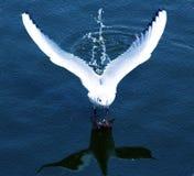 Oiseau de danse photos libres de droits