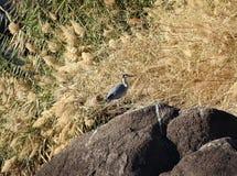 Oiseau de famille de cigogne sur un fond floral Images stock