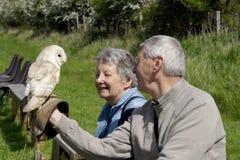 Oiseau de Fenton de centre de proie Images stock