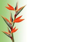 Oiseau de fleur de paradis Photo stock