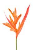 Oiseau de fleur de paradis. photo stock