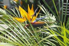 Oiseau de fleur de paradis photographie stock libre de droits