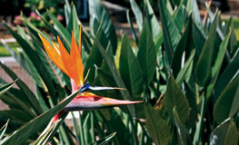 Oiseau de fleur de paradis Photos stock