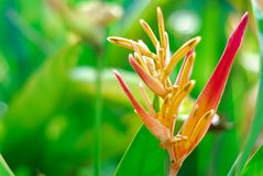 Oiseau de fleur de paradis dans le jardin photos stock