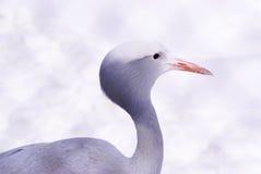 Oiseau de héron Photos libres de droits