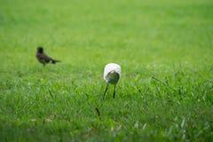 Oiseau de héron Images stock