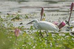 Oiseau de héron Photographie stock libre de droits