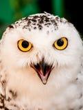 Oiseau de hibou photos stock