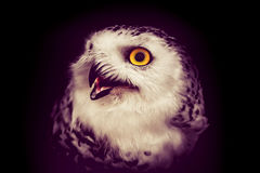 Oiseau de hibou images libres de droits
