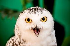 Oiseau de hibou images stock