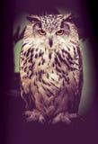 Oiseau de hibou photo stock