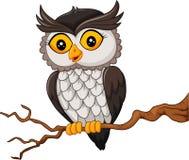 Oiseau de hibou de bande dessinée posant sur l'arbre Image stock