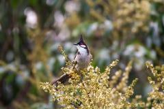 Oiseau de l'Asie Photos stock