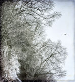 Oiseau de l'hiver Images stock