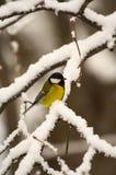 Oiseau de l'hiver photo stock