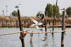 Oiseau de lagune du fleuve Pô image stock