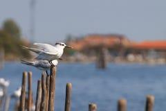 Oiseau de lagune du fleuve Pô images stock
