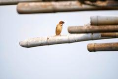 Oiseau de liberté image stock