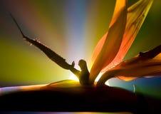 Oiseau de lis de paradis photographie stock libre de droits