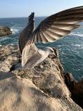 Oiseau de Lisbonne de mouette photo libre de droits
