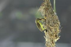 Oiseau de mère alimentant son bébé Photographie stock libre de droits