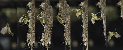 Oiseau de mère alimentant son bébé Image libre de droits