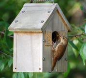 Oiseau de mère de Birdhouse avec la nourriture Photos libres de droits