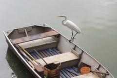 Oiseau de marche dans l'eau blanc photographie stock libre de droits