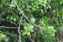 Oiseau de martin-pêcheur Photos libres de droits