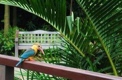 Oiseau de martin-pêcheur en stationnement Photo libre de droits