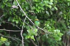 Oiseau de martin-pêcheur Photographie stock libre de droits