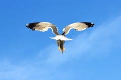 Oiseau de mer Photographie stock libre de droits