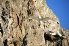 Oiseau de mer de mouette Image stock