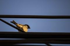 Oiseau de moineau Photographie stock libre de droits