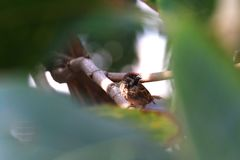 Oiseau, oiseau de moineaux se cachant dans des arbres forestiers de buissons photographie stock