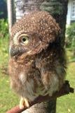 Oiseau de nuit Photo libre de droits