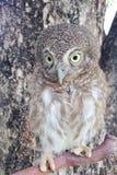 Oiseau de nuit Image stock