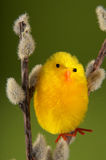 Oiseau de Pâques Images libres de droits