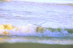 Oiseau de pélican blanc Image stock