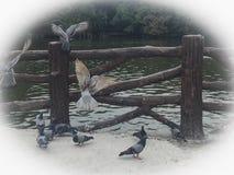 Oiseau de paix Image libre de droits