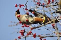 Oiseau de paix Photos libres de droits
