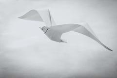 Oiseau de papier de mouette d'origami Photos libres de droits