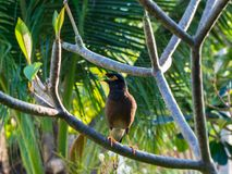Oiseau de paradis photo libre de droits