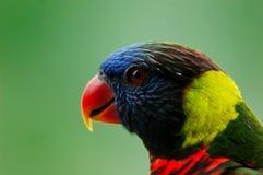 Oiseau de paradis image stock